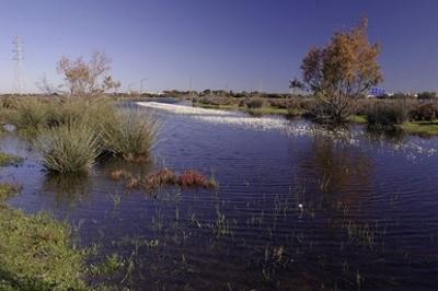 Creacion de Laboratorio Natural de Hidrologia en Parque Metropolitano de Los Toruños