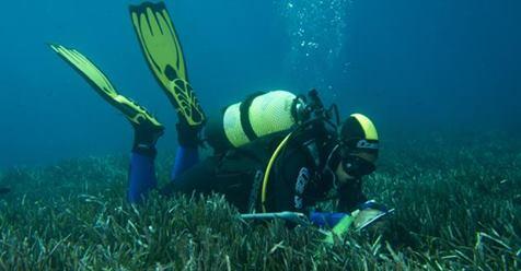 Se buscan buzos voluntarios para medir la salud de las posidonias marinas