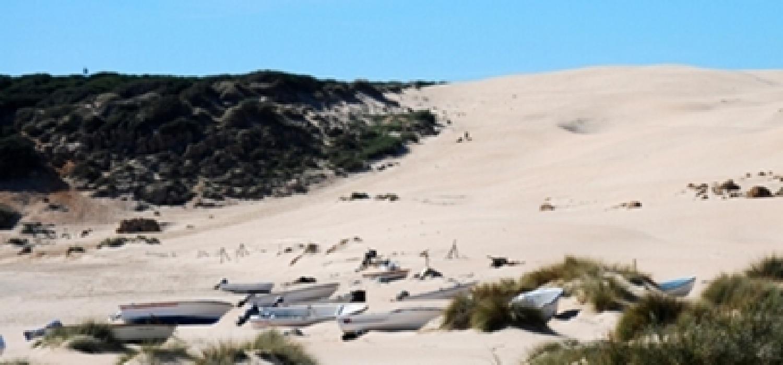 """La Universidad de Cádiz entra en el """"Academic Ranking of World Universities"""" entre las quinientas primeras en ciencias medioambientales (401-500) y muy cerca de las top 100 en oceanografía (101-150)."""